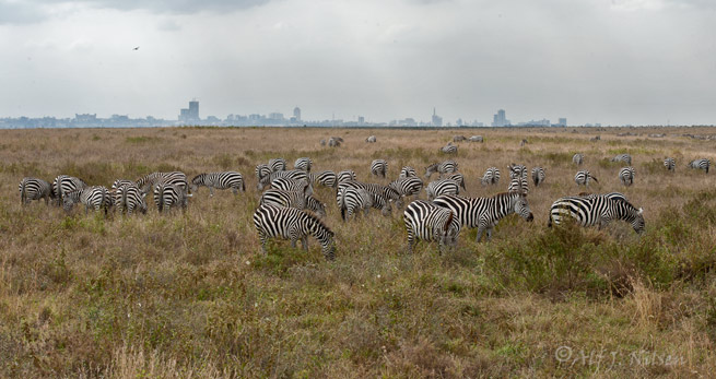 Nairobi skyline national park