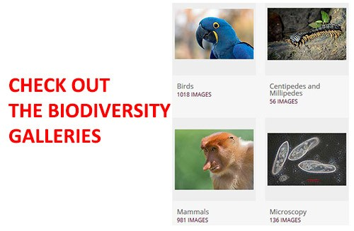 Check-out-the-biodiversity-galleries-1